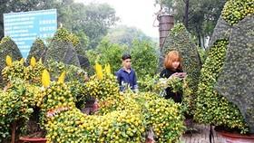 HCMC people prepare bonsai flowers for Tet