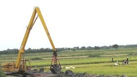 Mekong farmers urged summer-autumn rice harvest