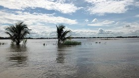 Mekong urged to deal with floods
