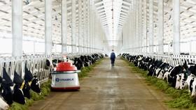Vinamilk mở tổ hợp trang trại bò sữa công nghệ cao tại Thanh Hóa