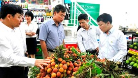 Saigon Co.op tiêu thụ vải thiều Lục Ngạn (Bắc Giang)
