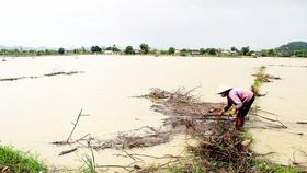 Ruộng đồng của nông dân Bình Định chìm trong biển nước. Ảnh: NGỌC OAI