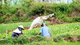Tiếp sức sáng tạo cho ngành nông nghiệp - Bài 3: Những nút thắt cần tháo gỡ