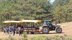 """Xe máy cày đưa khách đi tham quan """"cây thông cô đơn"""" trong khi tuyến du lịch chưa đăng ký và cơ quan chức năng chưa thẩm định"""