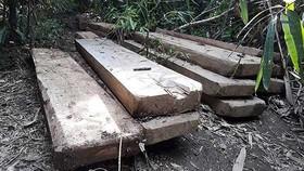 Phát hiện bãi tập kết gỗ lớn tại Đắk Lắk