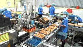 Sử dụng robot trong xử lý trứng, thực hiện sản xuất xanh tại doanh nghiệp ở TPHCM. Ảnh: CAO THĂNG