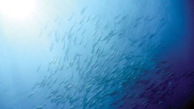 Biến đổi khí hậu đe dọa Thái Bình Dương