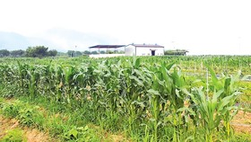 Một trang trại do Chính phủ Hàn Quốc hỗ trợ tại Gurye