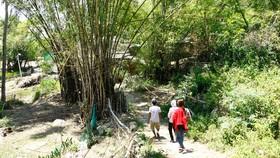 Đường về làng Gò Cỏ