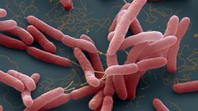 """Bộ Y tế cảnh báo phòng ngừa vi khuẩn """"ăn thịt người"""""""