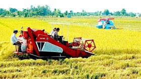 Hơn 10.000ha canh tác lúa gạo bền vững