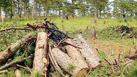 Chế tài hành vi trộm cắp, phá hoại cây cảnh