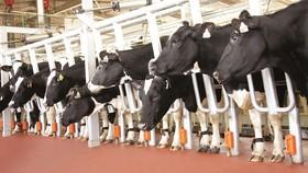 Tiếp sức sáng tạo cho ngành nông nghiệp - Bài 2: Xu hướng và triển vọng