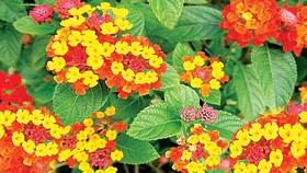 Bó hoa ngũ sắc