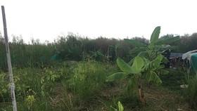 Thanh tra dự án Khu công nghiệp Phong Phú