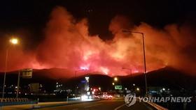 Ngọn lửa bao trùm vùng núi Gangneung ngày 5-4. YONHAP