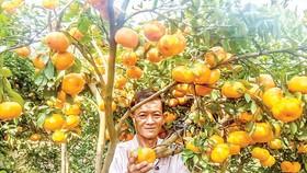 Nông nghiệp  thích ứng  4.0