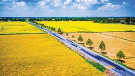 Con đường lúa gạo miệt Ngàn