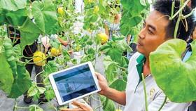 Nông nghiệp công nghệ cao vẫn còn thấp