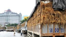 Cẩn trọng khi giao dịch xuất khẩu sang Trung Quốc