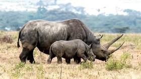 Trái phiếu bảo vệ động vật