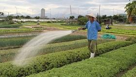Nghèo đói không có mối tương quan chặt chẽ đối với tình trạng không có ruộng đất?