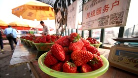 """草莓連續第三年成為""""最髒蔬果""""榜首"""