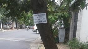 第九郡D2街人行道樹身上掛滿廣告單張。