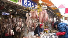 韓國最大的扎嘎其魚市。