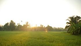 鄉村清晨格外寧靜