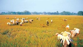 Risks to Mekong Delta granary increase