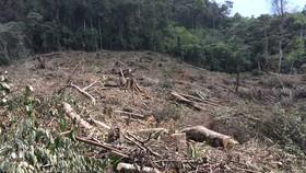 Kon Tum: Phá rừng ở nơi… cấm phá