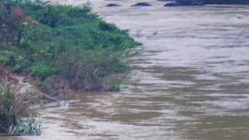 Đi chăn bò, 2 học sinh tiểu học bị nước cuốn trôi tử vong