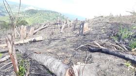 Ba đối tượng chặt phá hơn 1,2ha rừng phòng hộ