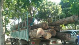 Kon Tum: Bắt vụ vận chuyển hơn 11m³ gỗ lậu