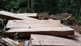 Khởi tố, bắt tạm giam đối tượng cưa hạ gỗ trái phép