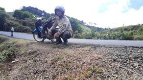 Vụ phát quang quốc lộ bằng thuốc diệt cỏ: Kiểm điểm trách nhiệm tổ chức, cá nhân có liên quan