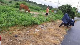 Hai cá nhân bị kỷ luật liên quan đến việc phun thuốc diệt cỏ trên quốc lộ