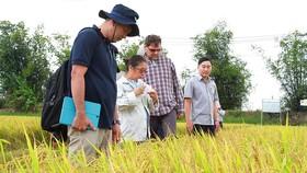 Tập đoàn Lộc Trời đưa chuyên gia nước ngoài hướng dẫn nông dân sản xuất tăng chất lượng gạo Việt