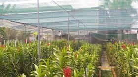 Xây dựng làng nghề hoa - cây kiểng, cá cảnh tại huyện Củ Chi
