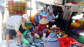 Ngư dân Bình Định trúng đậm cá ngừ, thu về tiền tỷ