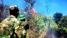 Trên 100 người cật lực dập lửa ở rừng Đèo Cả để bảo vệ rừng và nhà cửa