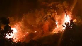 10ha rừng tự nhiên bị lửa thiêu rụi, nghi do thợ đốt ong rừng gây ra