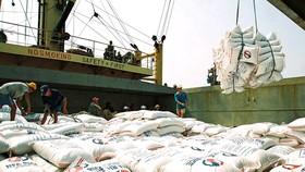 Gạo Việt Nam lên tàu xuất khẩu. Ảnh minh họa