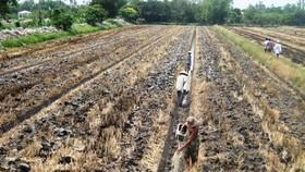 Chuyển đổi 126.333ha đất lúa kém hiệu quả trong năm 2019