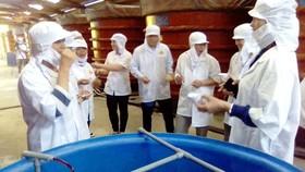 Đoàn công tác khảo sát sản xuất nước mắm truyền thống ở đảo Phú Quốc
