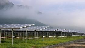 Nhà máy điện năng lượng mặt trời ở xã An Hảo, huyện Tịnh Biên, có quy mô lớn nhất ở tỉnh An Giang