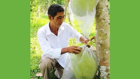 Cảnh báo ùn ùn trồng mít Thái xuất sang Trung Quốc