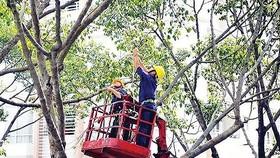 Chuyển giao chức năng quản lý nhà nước về công viên, cây xanh đô thị từ Sở GT-VT qua Sở Xây dựng TPHCM