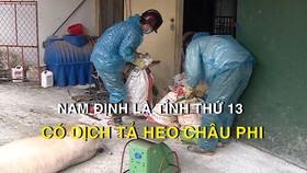 Nam Định là tỉnh thứ 13 có dịch tả heo châu Phi